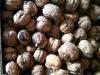 Nüsse aus Nußdorf am Attersee