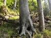 Wanderung auf den Schoberstein - Natur genießen