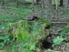 naturerlebnis weissenbachtal 2