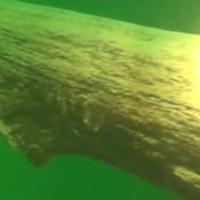 tauchgang attersee unterwasser wald
