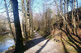 Naturlehrpfad Edelkastanienwald